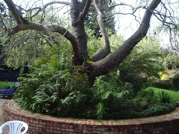 TreeBefore